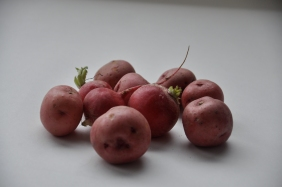 radishes to riches